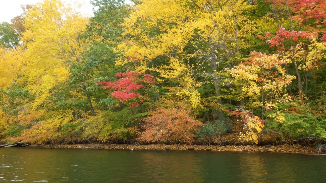 Trees of yellow, orange, red and green by the water's edge